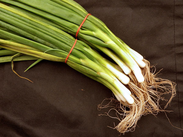 Click to enlarge Green Onion Bunches, 5-7 per bunch