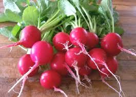 Click to enlarge Radish Cherry Belle Bunch