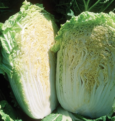 Click to enlarge Certified Naturally Grown Napa Cabbage