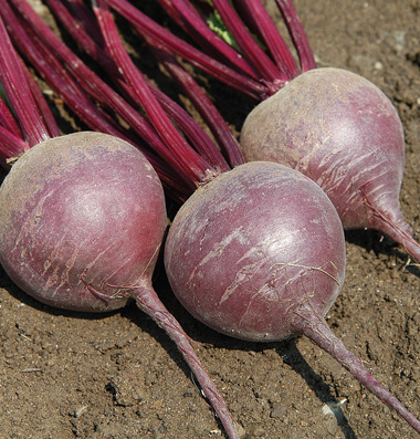 Click to enlarge Certified Naturally Grown Merlin Beets