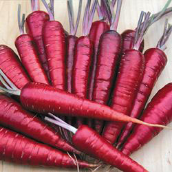 Click to enlarge Certified Naturally Grown Dragon Carrots