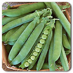 Click to enlarge Certified Naturally Grown Shell Peas