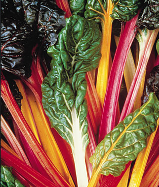 Click to enlarge Bright Lights Swiss Chard,8-10 leaves per bunch