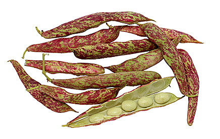 "Click to enlarge Certified Naturally Grown ""Tongue of Fire"" Beans"