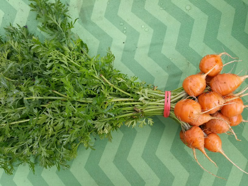 Click to enlarge Parisian Globe Carrots
