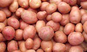"Click to enlarge Certified Naturally Grown ""Red Maria"" Potatoes"