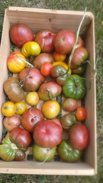 Click to enlarge Heirloom Tomato Mix