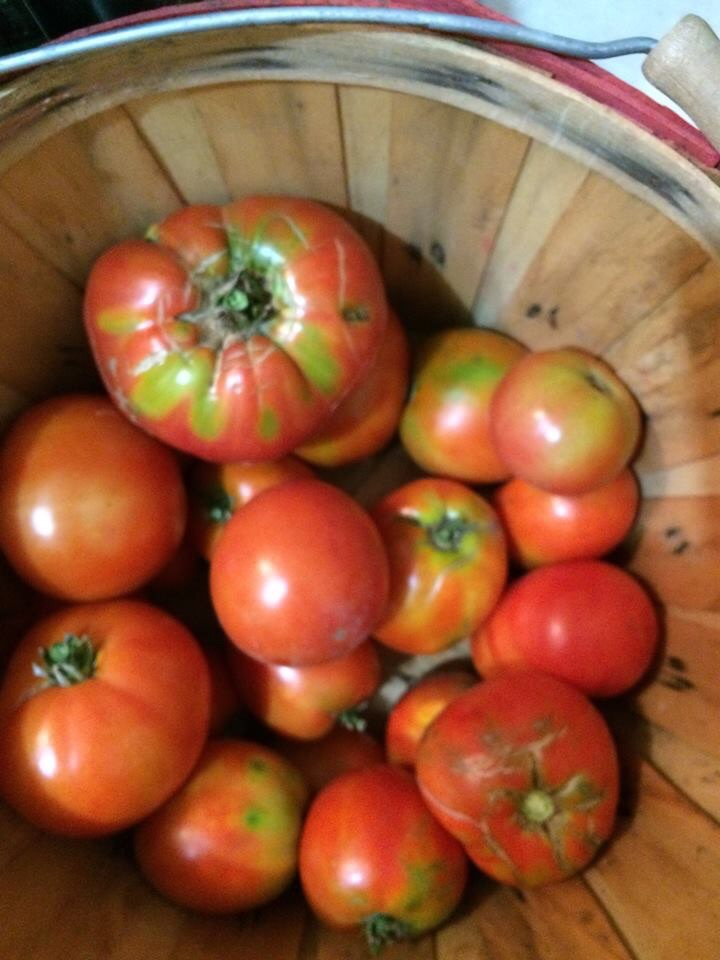 "Click to enlarge Heirloom Tomato mix ""RED or Red Striped"" - large"