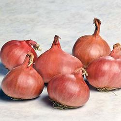 Click to enlarge Certified Naturally Grown Shallots