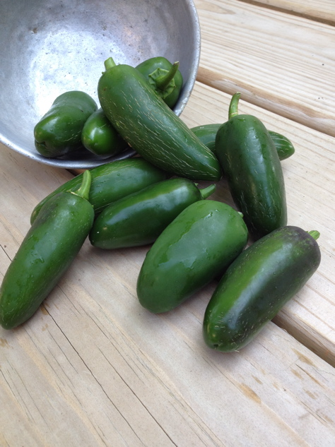 Click to enlarge Jalapeno Peppers