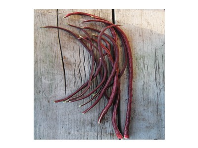 Click to enlarge Certified Naturally Grown Long Purple Bean
