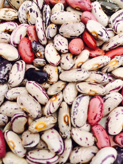 Click to enlarge Dry Cranberry Beans
