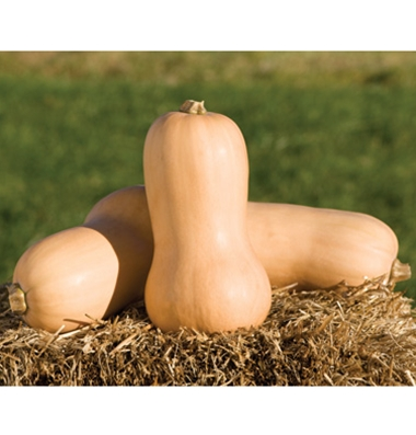 Click to enlarge Certified Naturally Grown Butternut Squash
