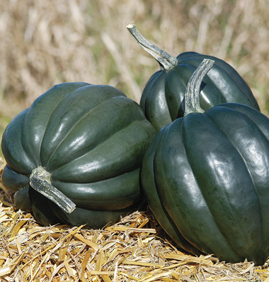 Click to enlarge Certified Naturally Grown Acorn Squash