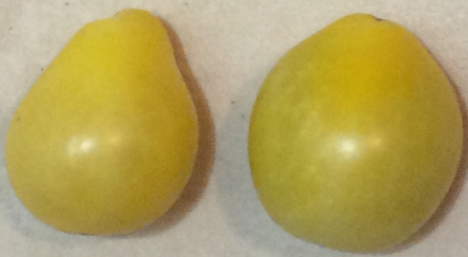 Click to enlarge White Pear Tomato