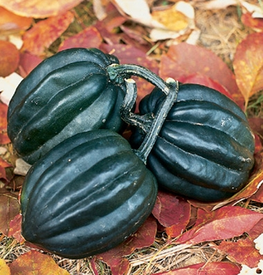 Click to enlarge Acorn Squash