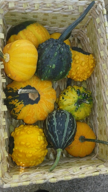 Click to enlarge decorative gourds