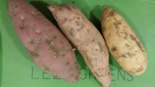 Click to enlarge Sale! sweet potatoes 3lb
