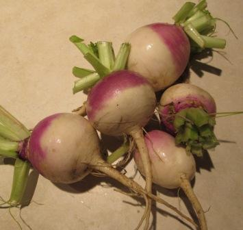 Click to enlarge Turnips