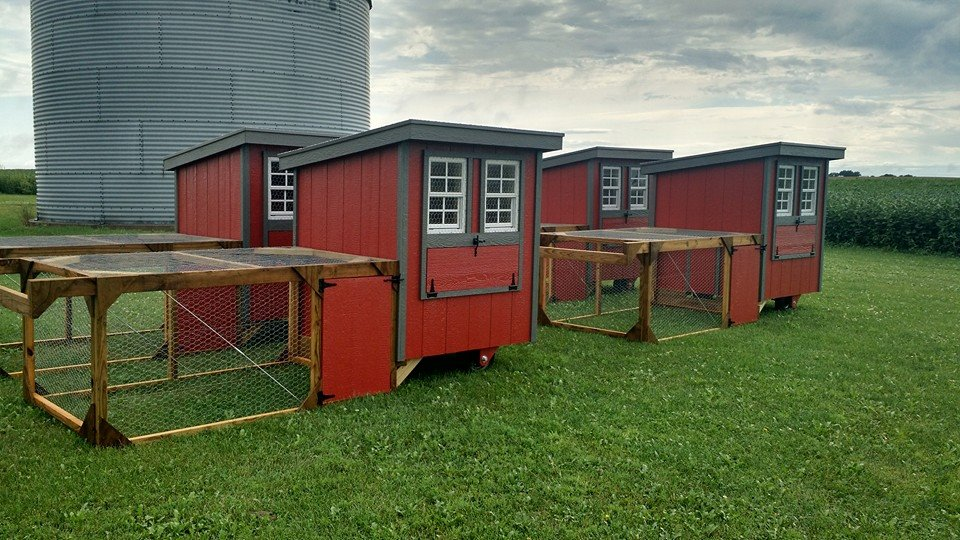 Click to enlarge Chicken Tractor 5