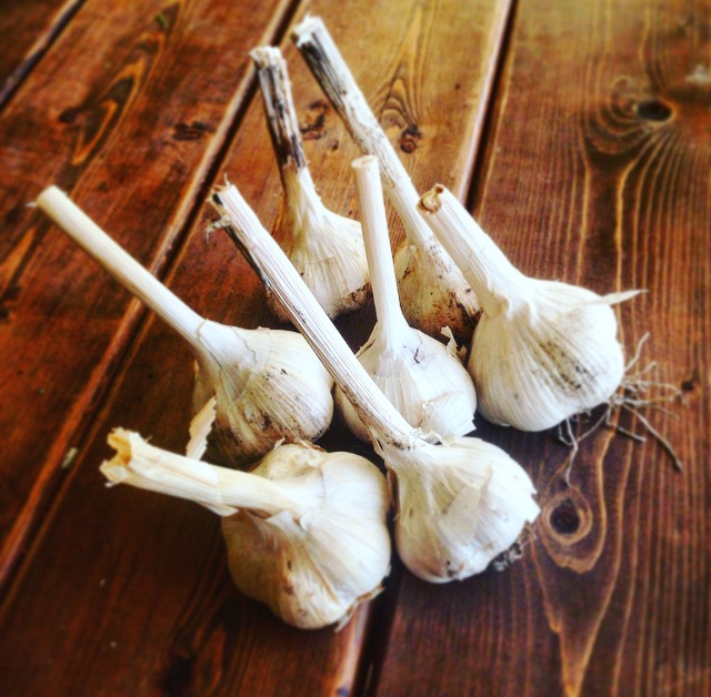 Click to enlarge Garlic by the pound! (Cooking must-have)