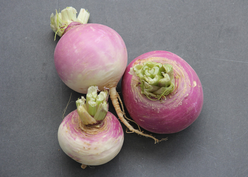 Click to enlarge Turnips, Purple Top