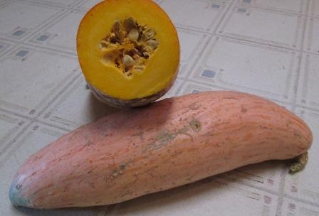 Click to enlarge Georgia Candy Roaster Winter Squash
