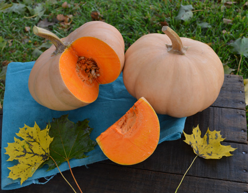Click to enlarge Mini Butterkin Squash