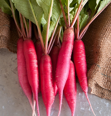 Click to enlarge  Shunkyo Semi-Long Radishes