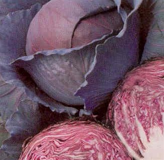Click to enlarge Transplant- Red Acre Cabbage 6 pack