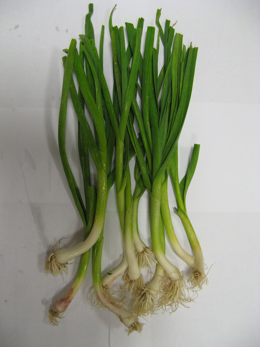 Click to enlarge Green Garlic