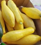 Click to enlarge Yellow summer squash