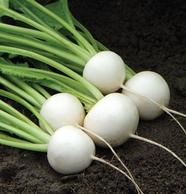 Click to enlarge Hakurei Turnips