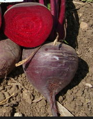 Click to enlarge Certified Naturally Grown Zeppo Beets