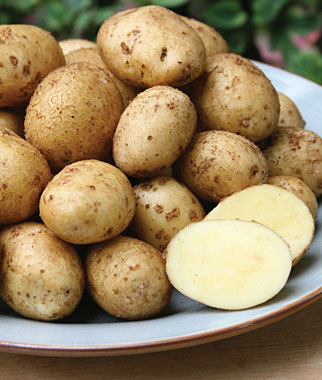 "Click to enlarge Certified Naturally Grown New ""German Butterball"" Potatoes"