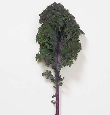 Click to enlarge Certified Naturally Grown Scarlet Kale