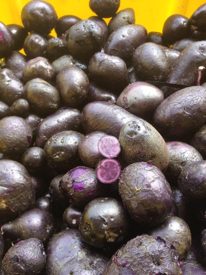 Click to enlarge New Potatoes, Purple Majesty