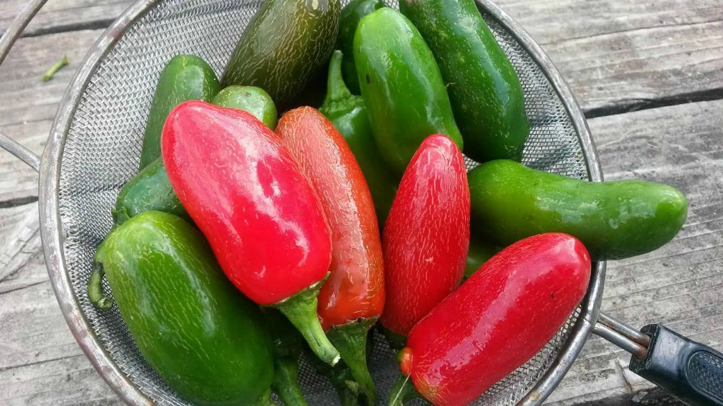 Click to enlarge Half Pound Pack of Jalapeno Peppers