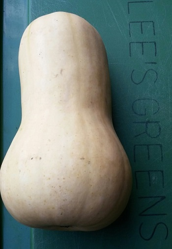Click to enlarge butternut squash 2-3 pound