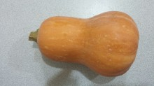 Click to enlarge Honeynut squash