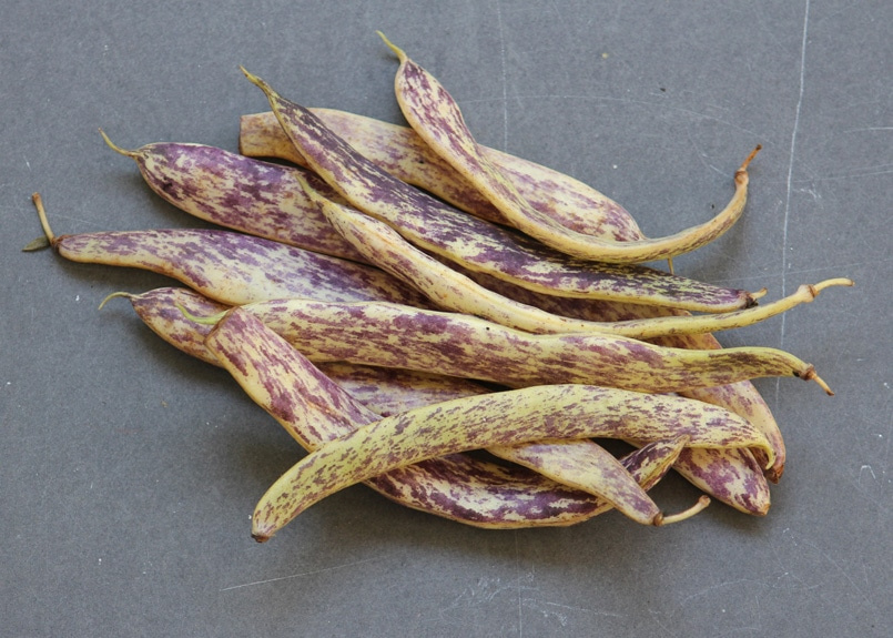 Click to enlarge Dragon Tongue Beans