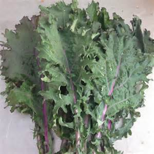 Click to enlarge Red Russian Kale