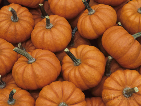 Click to enlarge Mini Pumpkins- perfect for decorating