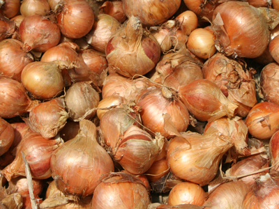 Click to enlarge Heirloom Potato Onions