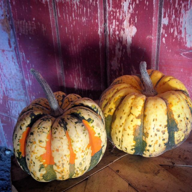 Click to enlarge Carnival Acorn Dumpling Winter Squash