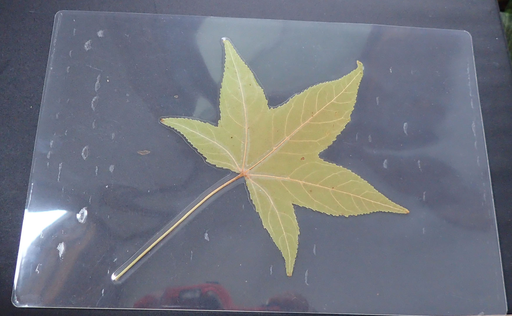 Click to enlarge Sweetgum small mat