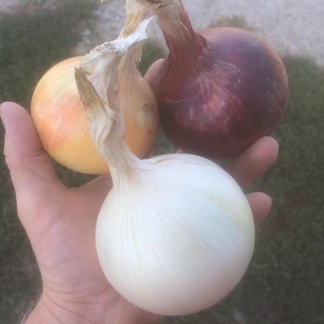 Click to enlarge Onions, Copra