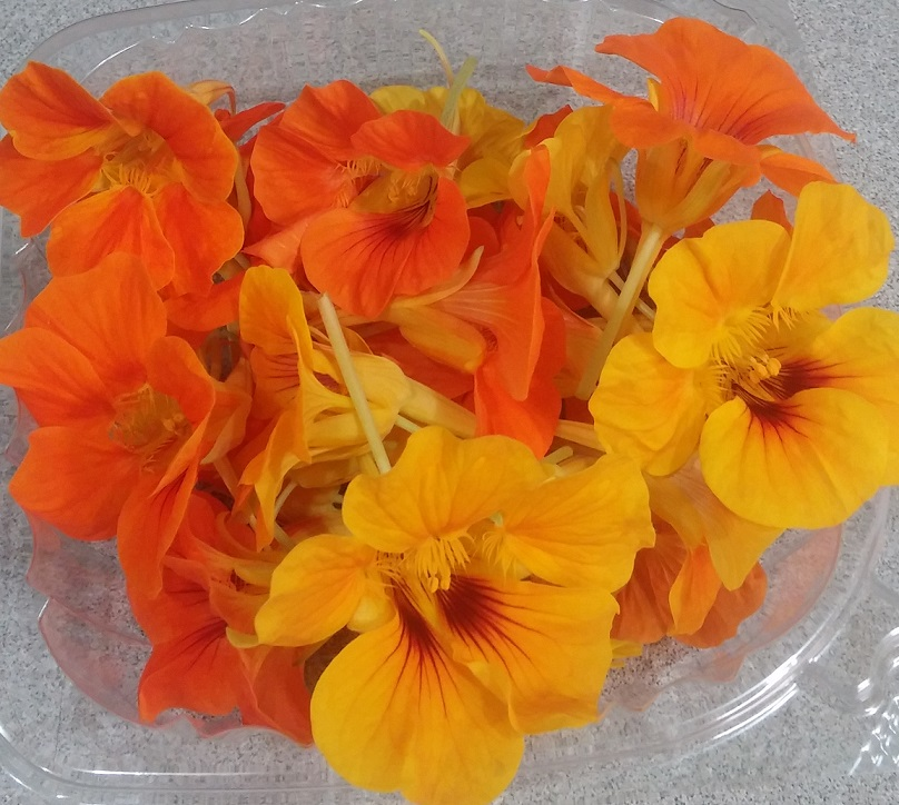 Click to enlarge Nasturtium blooms