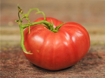 Click to enlarge Granny Cantrell German Red Heirloom Tomato Seedling