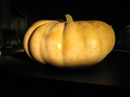 Click to enlarge Long Island Cheese Squash